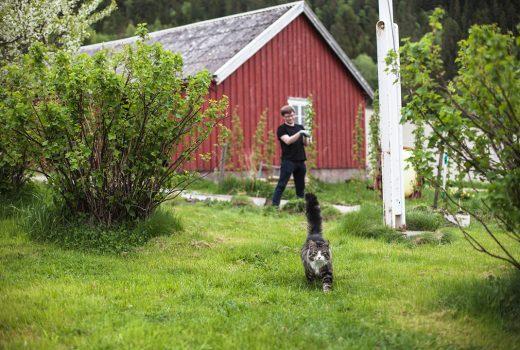 Gråpus i hagen