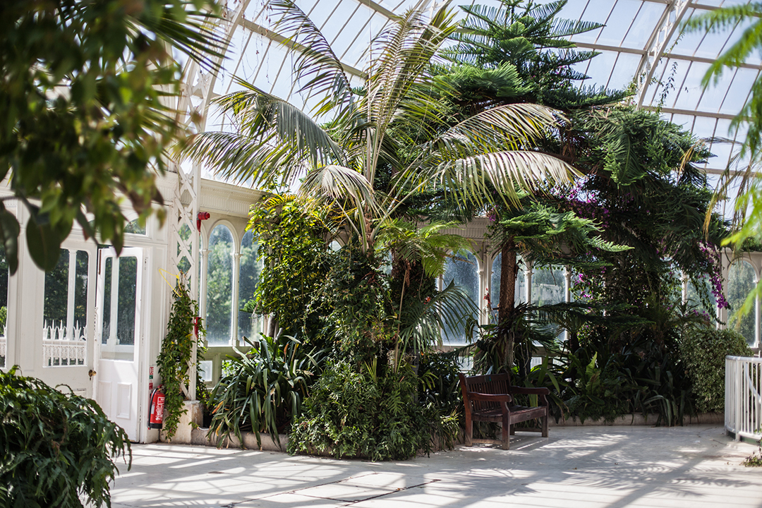 Palm House, Liverpool